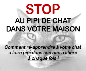 Stop au Pipi de Chat Partout