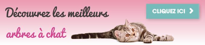 Parcourez les meilleurs arbres à chat disponibles sur Amazon.fr