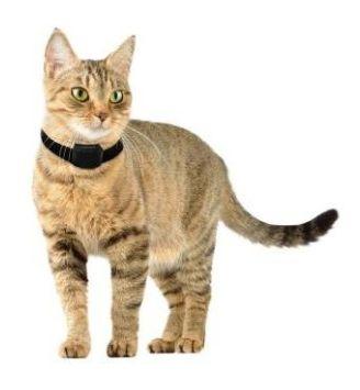 Achat collier anti fugue pour chat